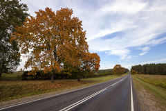 The autumn road Royalty Free Stock Photo