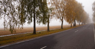 The autumn road Stock Images