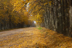 Autumn road strewned with yellow leaves Royalty Free Stock Image