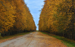 Autumn road strewned with yellow leaves Stock Photography