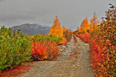 Autumn. Road to mountains. The Magadan area. Kolyma Royalty Free Stock Photos