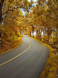 Autumn road towards the forest Royalty Free Stock Photography