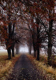 Autumn road with trees Royalty Free Stock Image