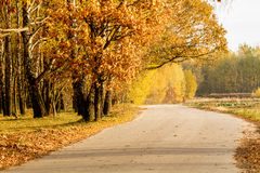 Autumn road. Between the trees Royalty Free Stock Images