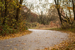 Autumn road. Between the trees Royalty Free Stock Photography
