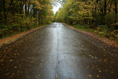 Autumn road among trees Stock Photography