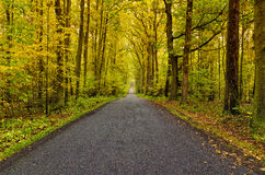 Autumn road. Winding road in autumn forest Royalty Free Stock Photo