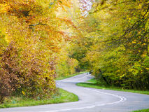 Autumn road. Winding road with trees on a sunny autumn day Stock Photography