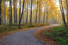 Autumn road in the colorful forest. A wooded country road at autumn with colorful foliage Royalty Free Stock Photo