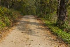 Autumn Road In Woods Immagini Stock