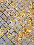 Autumn road. With yellow leaves. leaves on gray tiles stock images