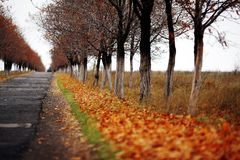 Autumn road. With yellow leaves after rain stock photography