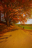 Autumn road. Yellow and orange trees Royalty Free Stock Images