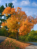Autumn in Rockcliffe Park, Ottawa Royalty Free Stock Image