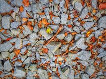 Autumn Rocks stock foto
