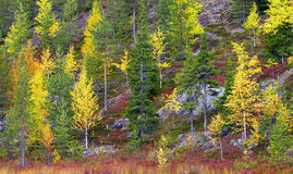 Autumn in rocky mountains in Northern Finland. Royalty Free Stock Image