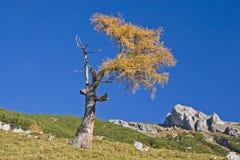 Autumn in Rofan Stock Photo