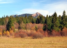 Autumn in Rohace hills, Slovakia. Late autumn view portraying meadow, coniferous forest and hills of Rohace mountains, part of Western Tatras in Slovakia before stock photo