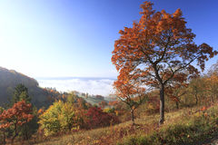 Autumn romantics. View in autumn from a hill with colored trees down to the valley with clouds and fog Stock Images