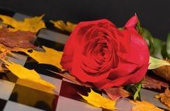Autumn rose Royalty Free Stock Image