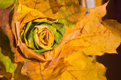 Autumn rose Royalty Free Stock Photo