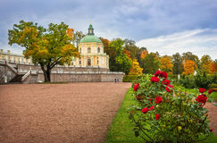 Autumn roses. In front of the palace of colorful trees Stock Photography