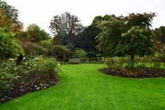 Autumn Roses Garden fotografia stock