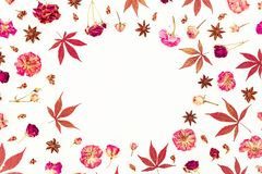 Autumn round frame of red maple leaves and dried roses on white background. Flat lay, top view. Stock Images