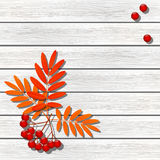 Autumn Rowan illustrazione vettoriale