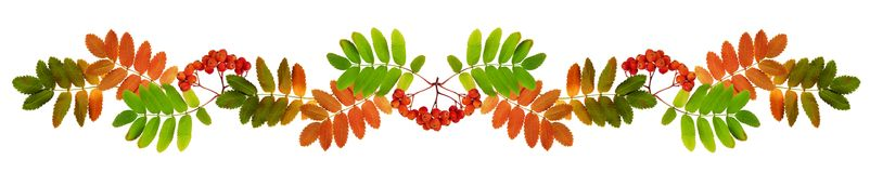 Autumn rowan berries and leaves in a garland  Royalty Free Stock Photo