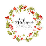 Autumn Rowan Berry Background. Floral Banner Design Stock Photos