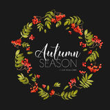Autumn Rowan Berry Background. Floral Banner Design in Vector. Royalty Free Stock Image