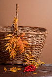 Autumn rowanberry and basket Stock Photo
