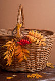 Autumn rowanberry and basket Stock Photography