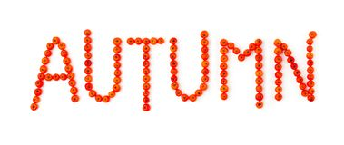 Autumn. Rowanberry font. Autumn. Autumnal rowanberry font on white Stock Image