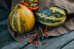 Autumn rowanberry and pumokin Stock Image