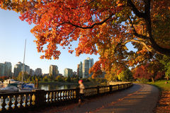 Autumn Run, Stanley Park Seawall, Vancouver Photographie stock libre de droits