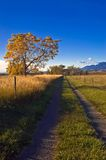 Autumn Rural Country Road in Boulder Colorado. A rural road leads to serenity in the morning sunlight outside of Boulder Colorado as the trees change the color Stock Photo