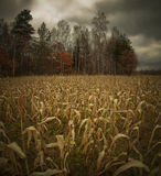 Autumn rural landscape Stock Images