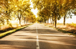 Autumn rural landscape with country road and gold trees along Royalty Free Stock Images