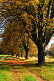Autumn rural landscape. Czech republic Royalty Free Stock Images