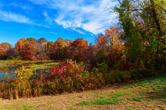жAutumn rural landscape - autumn oak trees near the pond Stock Photo