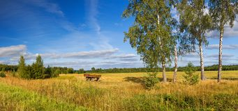 autumn rural landscape panorama, field, forest, blue sky and white clouds royalty free stock image