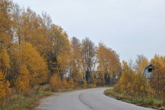 Autumn rural landscape: the road in the forest. Country road in the autumn forest Royalty Free Stock Photography
