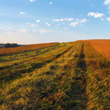 Autumn rural landscape Royalty Free Stock Photos