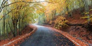 Autumn rural road Royalty Free Stock Photo