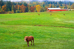 Autumn rural scenery, horse farm, Washington Stock Photos