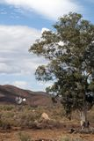 Outback landscape with windmill royalty free stock photography
