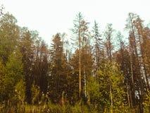 Autumn In The Russia Fotografia de Stock