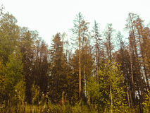 Autumn In The Russia Stockfotografie